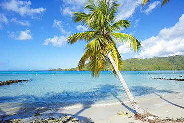 Beach and palm tree near the Club Mediterannee hotel , Le Marin, Martinique, French Overseas Deparrment, Windward Islands, West Indies, Caribbean, Central America