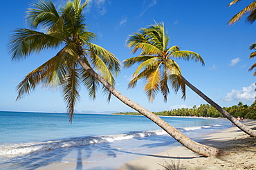 Silver sand and palm trees, Sainte Anne beach, Martinique, French Overseas Department, Windward Islands, West Indies, Caribbean, Central America