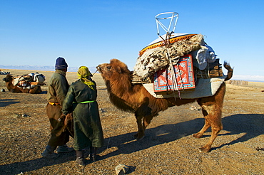 Nomadic transhumance with camel, Province of Khovd, Mongolia, Central Asia, Asia