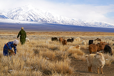 Nomadic Mongolian in winter, Province of Khovd, Mongolia, Central Asia, Asia