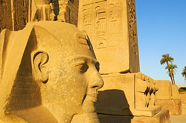 Statue of the pharaoh Ramesses II and Obelisk, Temple of Luxor, Thebes, UNESCO World Heritage Site, Egypt, North Africa, Africa