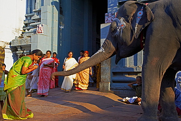 Elephant benediction, Kamakshi Amman, Kanchipuram, Tamil Nadu, India, Asia