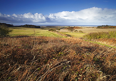 A bright winter day looking towards the North Sea at Salthouse Heath, Norfolk, England, United Kingdom, Europe