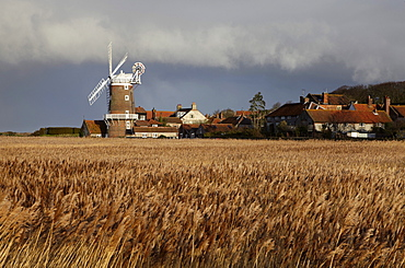 A bright winter day looking across the reedbeds towards Cley Mill at Cley next the Sea, Norfolk, England, United Kingdom, Europe