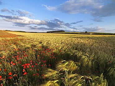 A summer view of the countryside near Burnham Market, Norfolk, England, United Kingdom, Europe