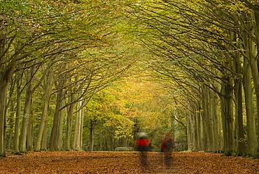 Autumn colours at Felbrigg Woods, Norfolk, England, United Kingdom, Europe