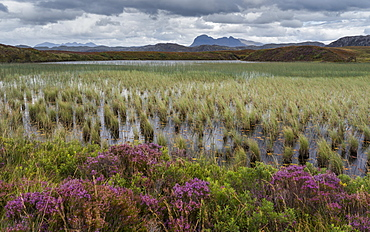 Suilven looms in the distance in this view across Loch Garvie near Achnahaird, Ross and Cromarty, Highlands, Scotland, United Kingdom, Europe