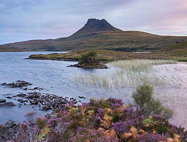 Beautiful heather colours at dawn by the shore of Loch Lurgainn, Ross and Cromarty, Highlands, Scotland, United Kingdom, Europe
