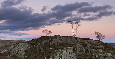 Skeletal trees atop crags at twilight at Holme Fell, Lake District National Park, Cumbria, England, United Kingdom, Europe