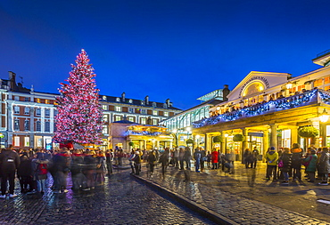 View of Christmas Tree in Covent Garden at dusk, London, England, United Kingdom, Europe