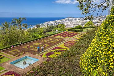 View of exotic flowers in the Botanical Gardens, Funchal, Madeira, Portugal, Atlantic, Europe