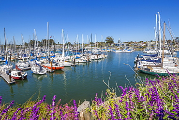 View of yachts at Santa Cruz Yacht Club, Santa Cruz, California, United States of America, North America