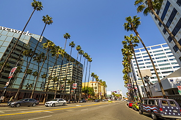 Palm trees and contemporary architecture on Hollywood Boulevard, Los Angeles, California, United States of America, North America