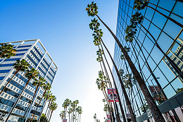 View of palm trees and contemporary architecture on Hollywood Boulevard, Los Angeles, California, United States of America, North America