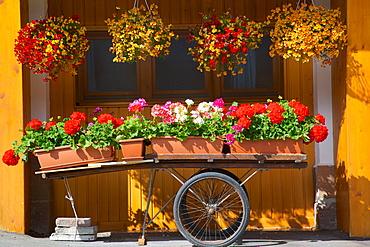 Flowers on trolley, Arabba, Belluno Province, Trento, Italy, Europe
