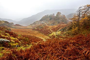 Castle Crag in the mist near Grange, Borrowdale, Lake District National Park, Cumbria, England, United Kingdom, Europe