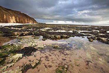 Toward Flamborough Head from Sewerby Rocks, Bridlington, East Riding of Yorkshire, England, United Kingdom, Europe