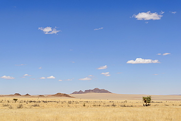 Gemsbok (Oryx gazella) sheltering from the midday sun in the NamibRand Nature Reserve, Namib Desert, Namibia, Africa