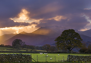 Shafts of light at sunset over the hills near Castlerigg, with sheep grazing in the nearby fields, Lake District National Park, Cumbria, England, United Kingdom, Europe