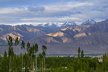 Mountains and poplars at sunrise from Leh, Ladakh, Himalayas, India, Asia