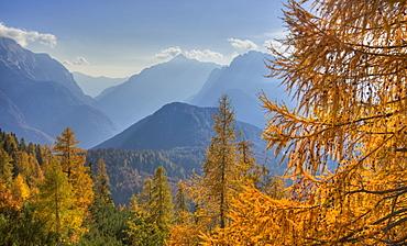 Golden larches and the Julian Alps from the Mangart Pass, Gorenjska, Slovenia, Europe