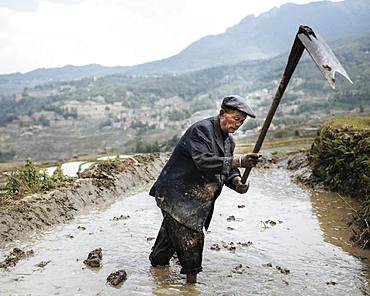 Farmer working in rice terrace, Duoyishu, UNESCO World Heritage Site, Yuanyang, Yunnan Province, China, Asia