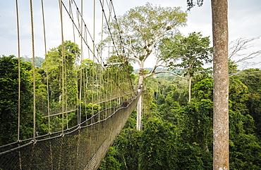 Tourists on Canopy Walkway through tropical rainforest in Kakum National Park, Ghana, Africa