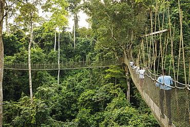Canopy Walkway through tropical rainforest in Kakum National Park, Ghana, Africa