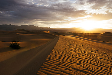 Mesquite Sand Dunes at dawn, Death Valley National Park, California, United States of America, North America
