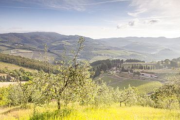 Olive groves and vineyards near to Radda in Chianti, Tuscany, Italy, Europe