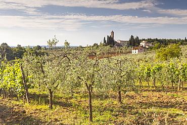 Olive groves near to Tavarnelle, Tuscany, Italy, Europe