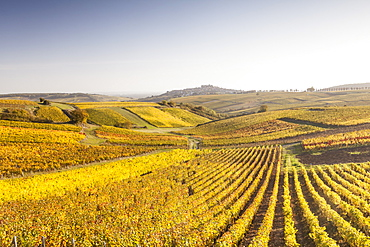 Autumn color in the vineyards of Sancerre, Cher, France, Europe