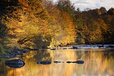 Beautiful autumn colours reflecting in the River Creuse, a favourite area of the river of the artist Claude Monet, Limousin, France, Europe