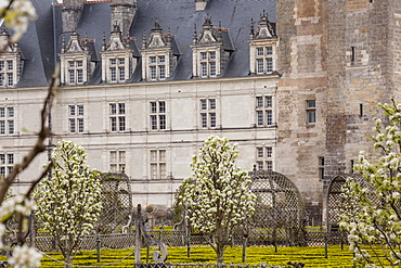Symmetrically beautiful gardens at the chateau of Villandry, UNESCO World Heritage Site, Loire Valley, Indre et Loire, Centre, France, Europe