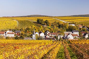 Autumn color in the vineyards surrounding Bue, Sancerre, Cher, Centre, France, Europe