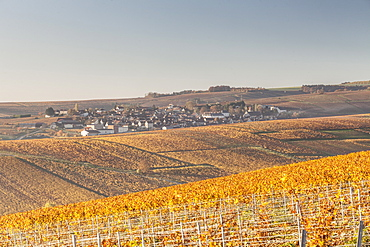Autumn in the vineyards of Chablis, Burgundy, France, Europe