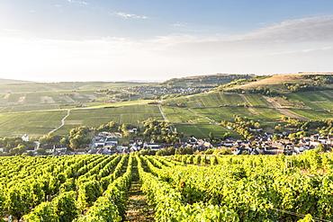 The vineyards of Sancerre above Chavignol, Cher, Centre, France, Europe