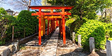 Torii gates at Nezu Shrine in Bunkyo ward, Tokyo, Japan.