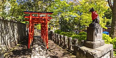Torii gates at Nezu Shrine in Bunkyo ward, Tokyo, Japan, Asia