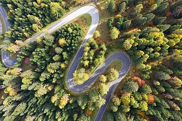 Autumn colour on a mountain pass in the Italian Dolomites, Trento-Alto Adige, Italy, Europe