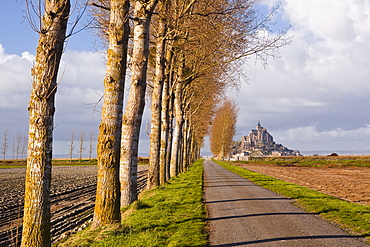 A tree lined avenue leads towards Mont Saint Michel, UNESCO World Heritage Site, Normandy, France, Europe