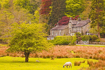 A house amongst the woodland near to Ambleside in the Lake District National Park, Cumbria, England, United Kingdom, Europe