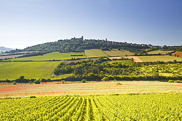 Vineyards near to the hilltop village of Vezelay in the Yonne area of Burgundy, France, Europe