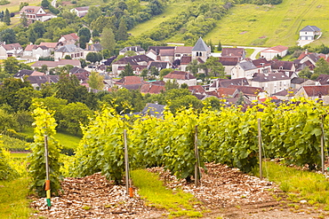 Champagne vineyards near to Balnot-sur-Laignes in the Cote des Bar area of the Aube department, Champagne-Ardennes, France, Europe