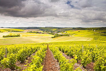 Champagne vineyards above the village of Noe les Mallets in the Cote des Bar area of Aube, Champagne-Ardennes, France, Europe