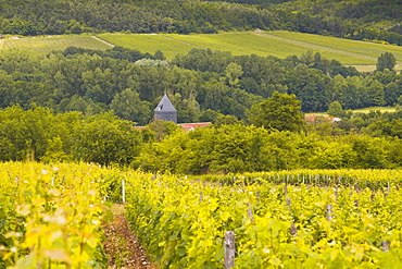 Champagne vineyards above the village of Chervey in the Cote des Bar area of Aube, Champagne-Ardennes, France, Europe