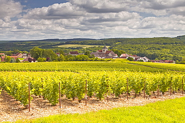 Champagne vineyards above the village of Landreville in the Cote des Bar area of Aube, Champagne-Ardennes, France, Europe