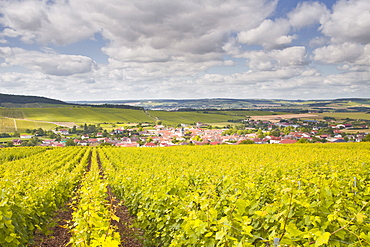 Champagne vineyards above the village of Baroville in the Cote des Bar area of Aube, Champagne-Ardennes, France, Europe