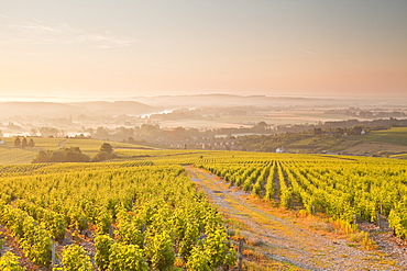 The vineyards of Sancerre in the Loire Valley, Cher, Centre, France, Europe