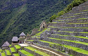 Agricultural terraces , Machu Picchu, peru, peruvian, south america, south american, latin america, latin american South America. The lost city of the Inca was rediscovered by Hiram Bingham in 1911